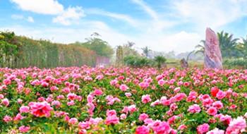 万博官网手机版网页版登录大力发展热带特色高效农业打响热带特色农业王牌