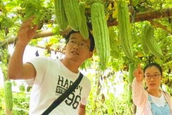 万博官网手机版网页版登录南繁院冬季瓜菜中心开展苦瓜新组合展示