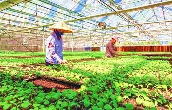 万博官网手机版网页版登录热带农业科学研究院瓜菜良苗助力增收