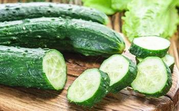 澄迈黄瓜细嫩清香,味道鲜美,是主要瓜菜之一