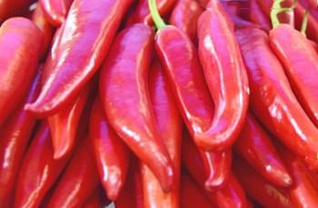 澄迈辣椒:冬种北运主要蔬菜种类之一