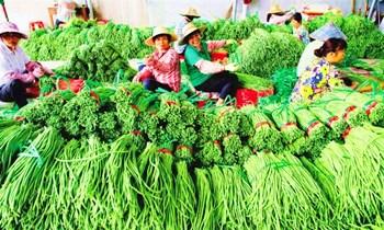 澄迈豇豆:味道鲜美,食用方法多种多样