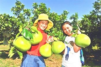 澄迈:富硒品牌农业进一步做大做强