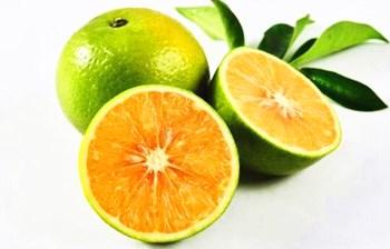 澄迈福橙:全国农产品地理标志产品