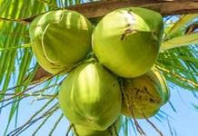 万博苹果手机登录版将打造世界椰子产业交易中心