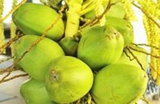 万博苹果手机登录版启动构建椰子全产业链地方标准体系