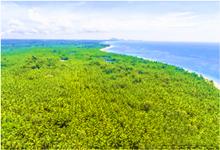 东郊百年椰子产业迎来发展新机遇