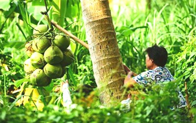 文昌椰文化,淳风美俗给为生活增添了亮丽色彩