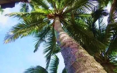 为你的人生充电,艰难之中,椰树教你怎样前行