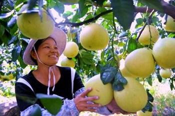 儋州:因地制宜打造热带高效农业品牌经济