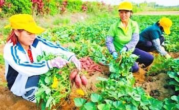 澄迈:农业品牌成为推动乡村振兴的一股重要力量