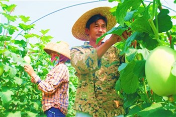 乐东:引进多个龙头企业带动多渠道促农民增收