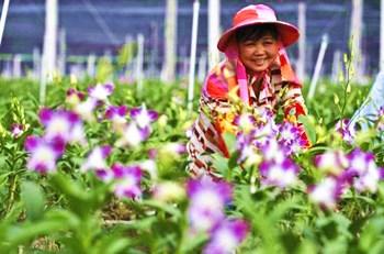 东方:热带特色高效农业蓬勃发展