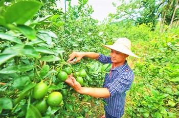 孙明清:从品牌着手把万博苹果手机登录版柠檬打造成一个大产业
