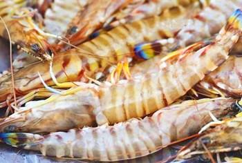 万博app官网下载港北对虾:色与味皆独具其美,肉鲜红