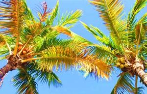 万博苹果手机登录版:突破技术瓶颈打造国际椰子产业交易中心