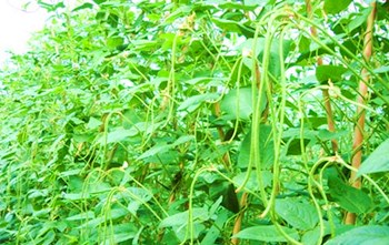 乐东县积极抓好冬春瓜菜生产增加农民收入