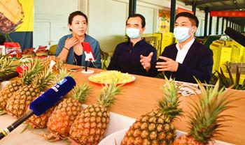 文昌书记市长淘宝直播两小时卖出70多万斤凤梨
